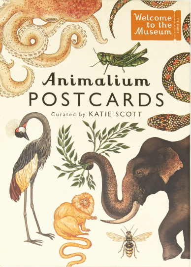 Animalium. Postkarten-Set.