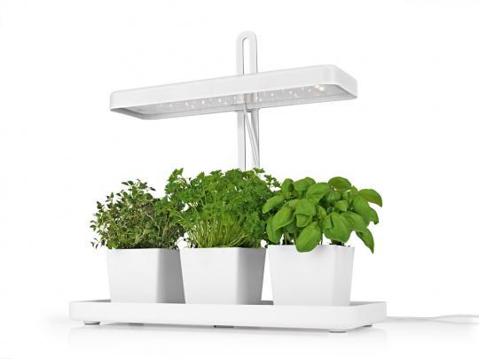 LED-Pflanzenleuchte mit drei weißen Töpfen.