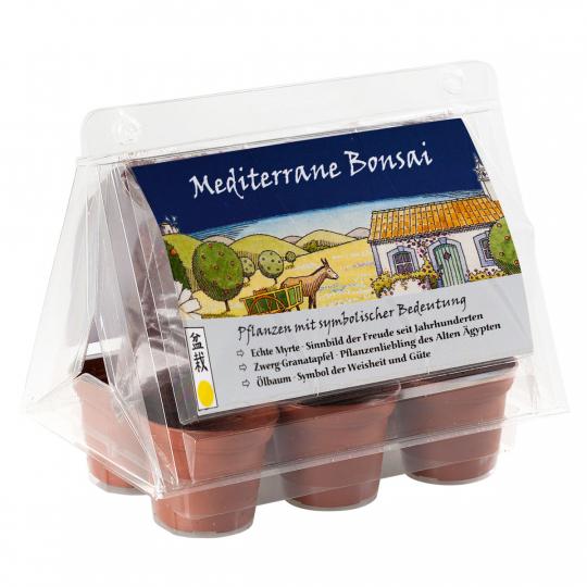 Mini-Gewächshaus »Mediterranes Bonsai«.