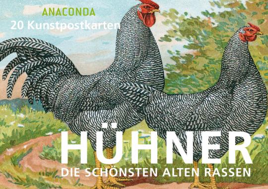 Postkartenbuch Hühner. Die schönsten alten Rassen.