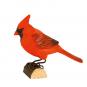 Amerikanischer Rotkardinal. Bild 1