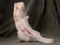 Beautiful Pigeons. Schöne Tauben. Bild 1