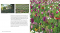 Ein Jahr in meinem Garten. Inspirierende Pflanzkombinationen für jeden Garten. Bild 2