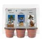 Mini-Gewächshaus »Mediterranes Bonsai«. Bild 2