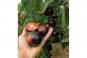 Saatgut-Box »Tomaten«. Bild 2