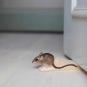 Türstopper Maus. Bild 2