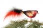 Vogel rot schwarz mit roter und schwarzer Feder. Bild 2
