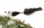 Vogel weiß schwarz mit schwarzen Federn. Bild 2