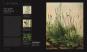 Botanik für Künstler. Pflanzen zeichnen und malen. Bild 3