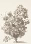 Briefpapierblock »Florale Gravuren«. DIN A5. Bild 3