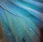 Foto Schmetterling im Rahmen »Blauer Morphofalter«. Bild 3