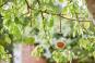 Futterstation Apfel für Vögel, Herz. Bild 3