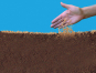 Hochwertige Gräsermischung »Wunder-Rasen«. Bild 3