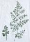 Leinen-Geschirrtuch »Blättermotiv«, weiß. Bild 3