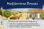 Mini-Gewächshaus »Mediterranes Bonsai«. Bild 3
