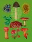 Das Museum der Pflanzen. Postkartenbuch. Bild 4
