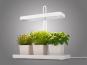 LED-Pflanzenleuchte mit drei weißen Töpfen. Bild 4