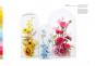Die Farbenlehre der Blumen. Bild 6