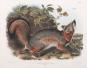 John J. Audubon. Die Säugetiere Nordamerikas. Bild 6