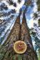 Uhr aus Baumscheibe »Tischuhr Baumscheibe«. Bild 6